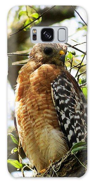 Hawk Taking A Rest On A Tree In Lakeland Florida Galaxy Case
