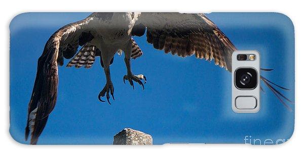 Hawk Taking Off Galaxy Case