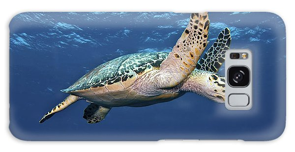 Galaxy Case featuring the photograph Hawksbill Sea Turtle In Mid-water by Karen Doody