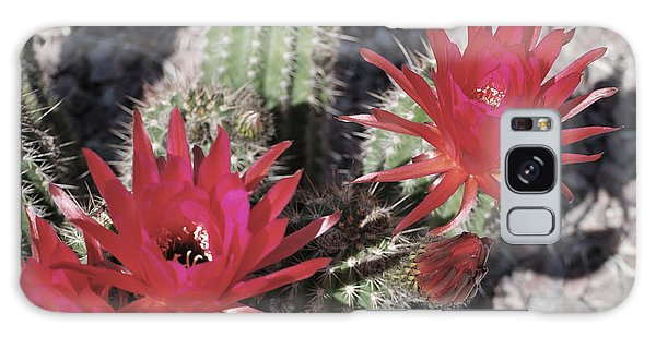 Hedgehog Cactus Galaxy Case by Donna Greene