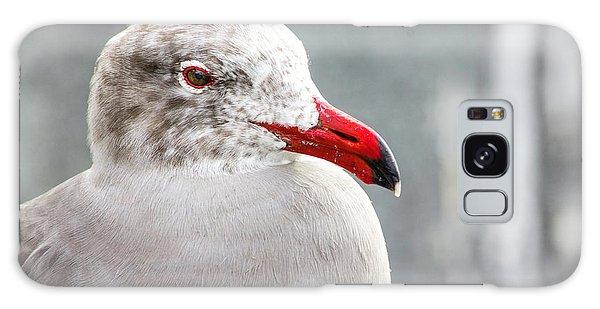 Heerman's Gull Galaxy Case