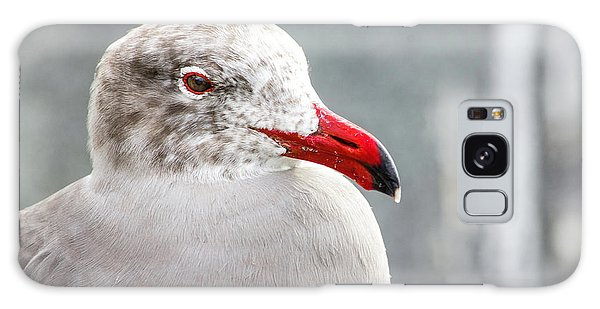 Heerman's Gull Galaxy Case