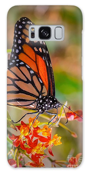 Hello Butterfly Galaxy Case