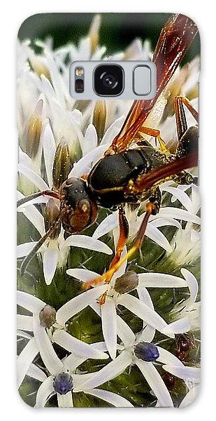 Hello, Wasp Galaxy Case