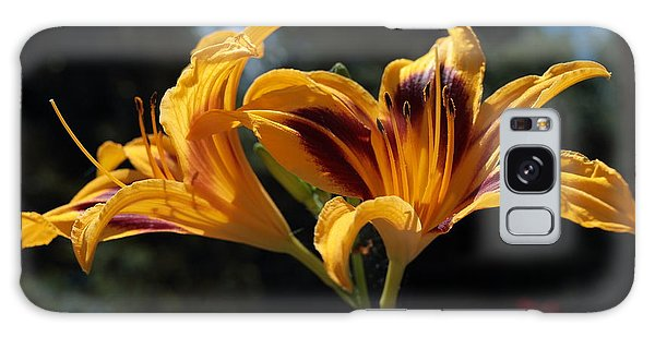 Hemerocallis Galaxy Case