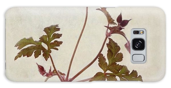 Herb Robert - Wild Geranium  #flower Galaxy Case