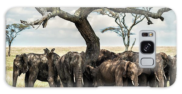 Herd Of Elephants Under A Tree In Serengeti Galaxy Case