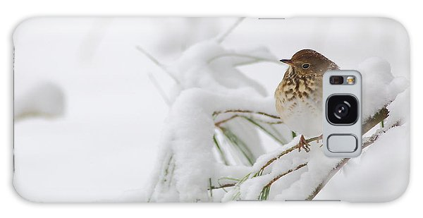 Hermit Thrush In Snow Galaxy Case