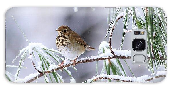 Hermit Thrush In Snowy Pine Galaxy Case
