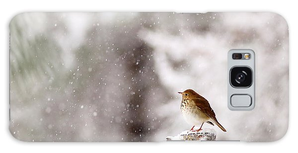 Hermit Thrush On Post In Snow Galaxy Case