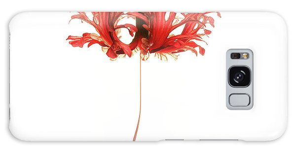 Hibiscus Galaxy Case - Hibiscus Schizopetalus On White by Christopher Johnson
