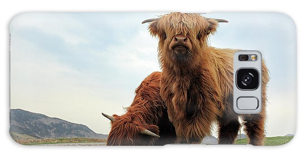 Highland Cow Calves Galaxy Case