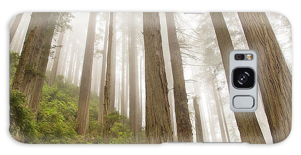 Hike Through The Redwoods Galaxy Case