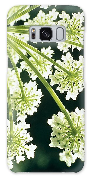 Blossoms Galaxy Case - Himalayan Hogweed Cowparsnip by American School