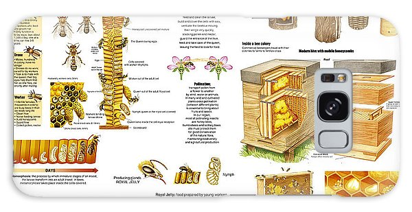 Honey Bees Infographic Galaxy Case