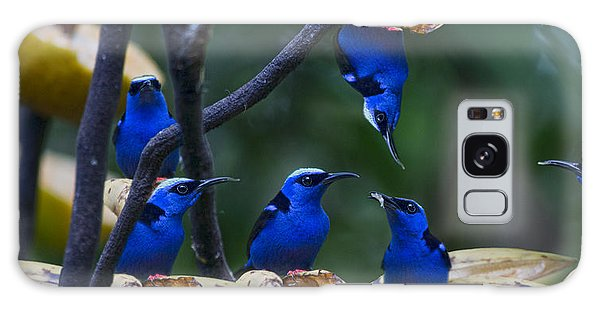 Honeycreeper Galaxy Case by Betsy Knapp
