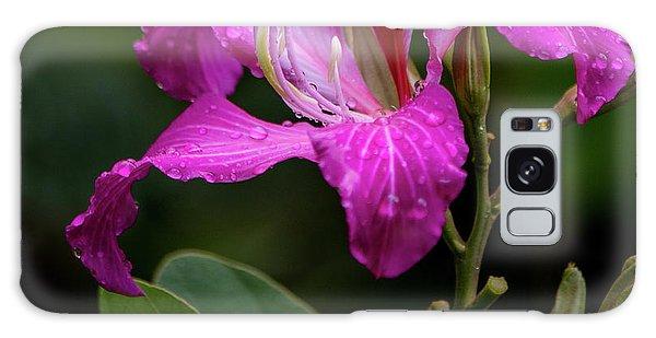 Hong Kong Orchid Galaxy Case