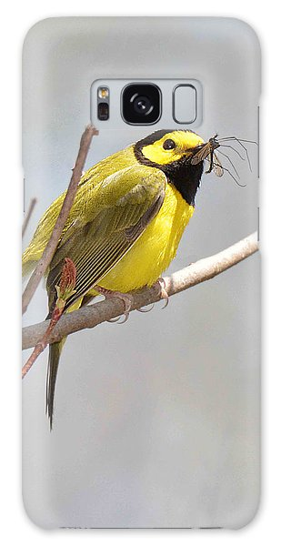 Hooded Warbler With Bug Galaxy Case