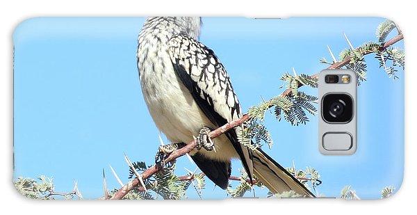 Hornbill In Thorn Tree Galaxy Case