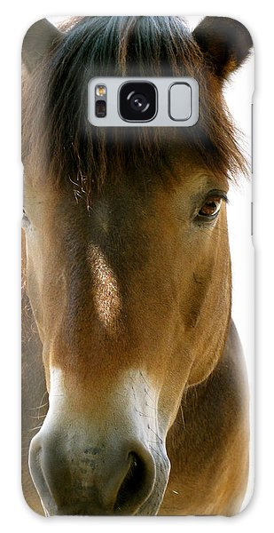 Horse Of Course Galaxy Case