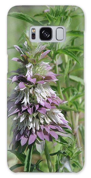 Horsemint Galaxy Case