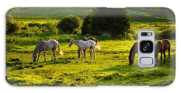 Horses Grazing In Evening Light Galaxy Case