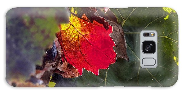 Hot Autumn Colors In The Vineyard Galaxy Case
