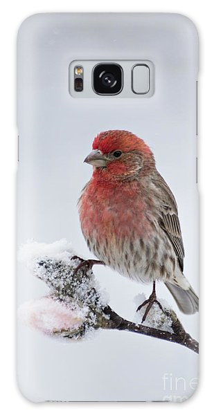 Feather Stars Galaxy Case - House Finch And Spring Snowfall - D010346 by Daniel Dempster