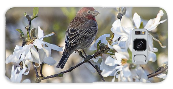 Feather Stars Galaxy Case - House Finch - D009905 by Daniel Dempster