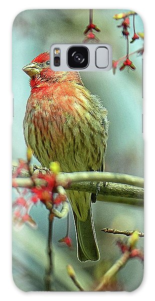 House Finch In Spring Galaxy Case