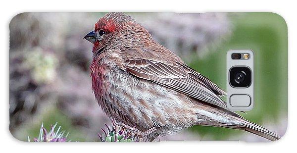 House Finch Male Galaxy Case