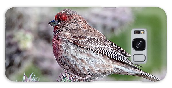 House Finch Male Galaxy Case by Tam Ryan