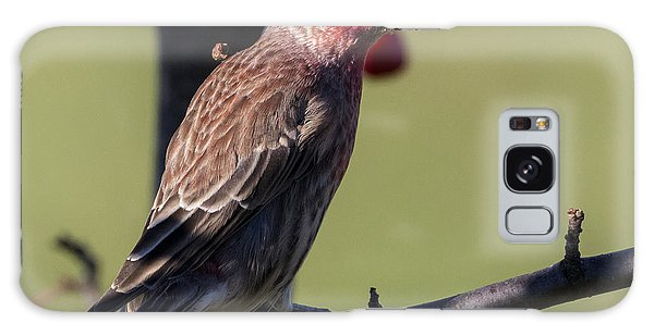 House Finch Vs Crabapple  Galaxy Case