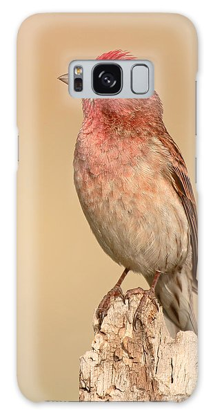 House Finch With Crest Askew Galaxy Case