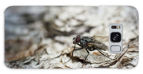 House Fly Galaxy Case by Chevy Fleet