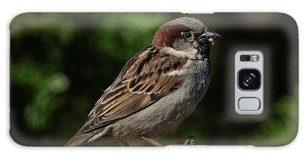 House Sparrow 2 Galaxy Case