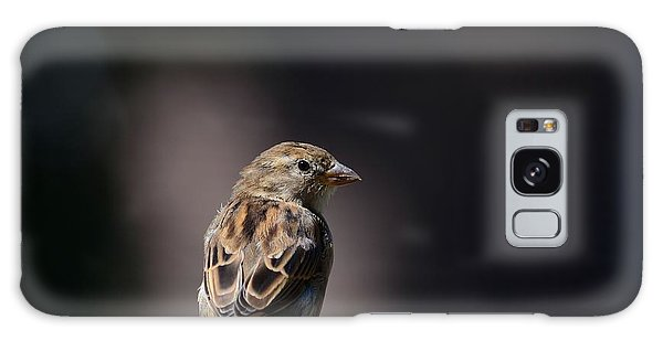 House Sparrow Galaxy Case