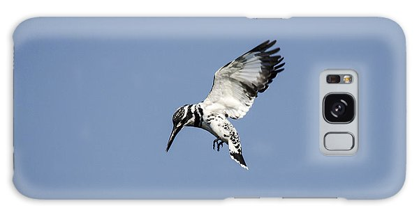 Hovering Of White Pied Kingfisher Galaxy Case by Manjot Singh Sachdeva