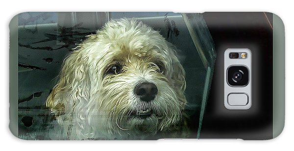 How Much Is That Doggie In The Window Galaxy Case
