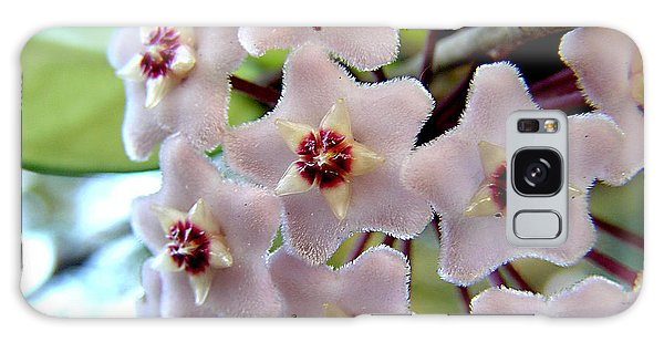 Hoya Blooms Galaxy Case