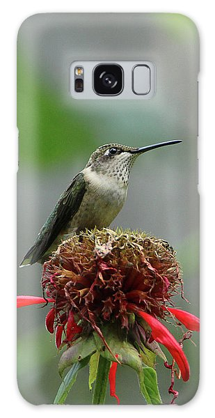 Humming Bird Atop Bee Balm Galaxy Case
