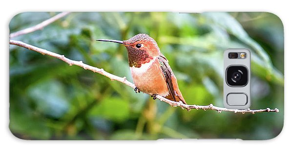 Humming Bird On Stick Galaxy Case by Stephanie Hayes