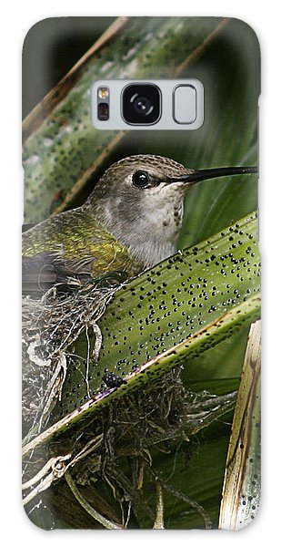 Nesting Anna's Hummingbird Galaxy Case