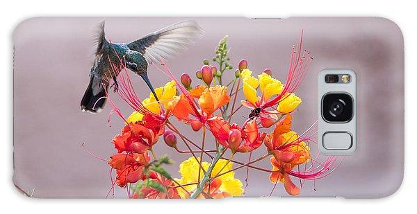 Hummingbird At Work Galaxy Case