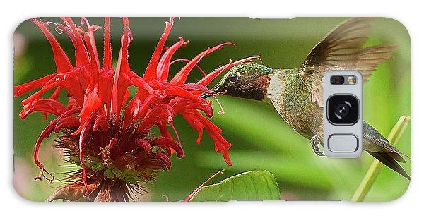 Hummingbird Delight Galaxy Case