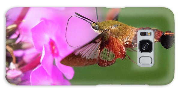 Hummingbird Moth Feeding 2 Galaxy Case