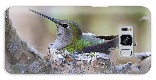 Hummingbird On Nest Galaxy Case