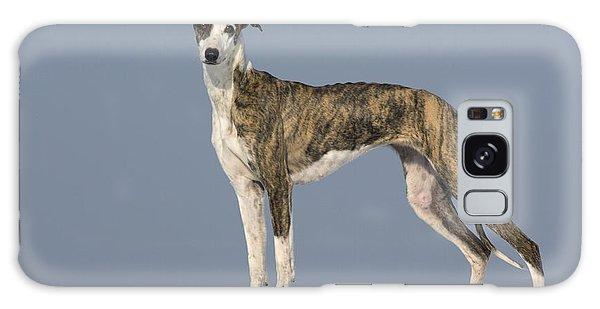 Sighthound Galaxy Case - Hungarian Greyhound by Jean-Louis Klein & Marie-Luce Hubert