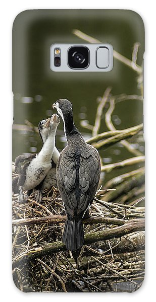 Hungry Pied Shag Chicks Galaxy Case by Racheal Christian