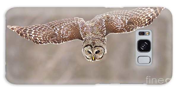 Hunting Barred Owl  Galaxy Case by Mircea Costina Photography